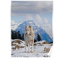White Grey Wolf & Rocky Mountains Art  Poster