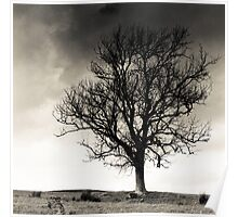 Tree, Southern Upland Way, Scottish Borders Poster