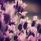 Lavender is for lovers true  by Joshua Greiner