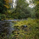 Lake Creek #334321 by Charles & Patricia   Harkins ~ Picture Oregon
