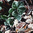 Green Frosty Leaf by timkirman