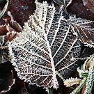 Frozen Leaf by timkirman