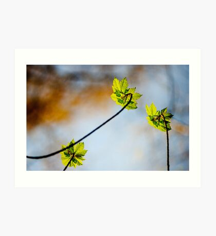 Macro,Lindinny Woods, Scottish Borders, Spring 2011 Art Print