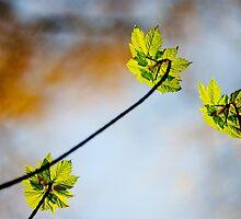 Macro,Lindinny Woods, Scottish Borders, Spring 2011 by Iain MacLean