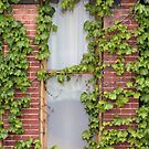 Ivy at its Best by Sandra Lee Woods
