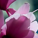 Mother's Flower by Jaysen Edgin