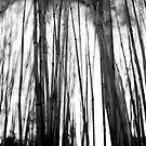 Bamboo, Dawyck Gardens, Scottish Borders, Feb 2012 by Iain MacLean