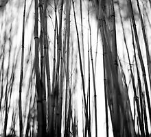 Bamboo, Dawyck Gardens, Scottish Borders, Feb 2012 by Iain MacLean