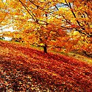 Flora, Autumn Time, &#x27;Blazing Colour&#x27; by photoj