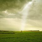 Essex by Nigel Bangert