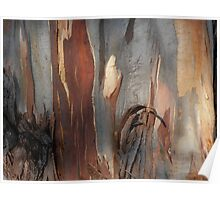 Bark Markings, Penguin, Tasmania, Australia. Poster