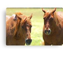 """Who Said """"Blondes"""" are better??? Canvas Print"""