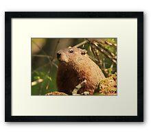 Close Encounter with a Groundhog Framed Print