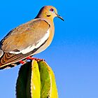White Winged Dove by George I. Davidson