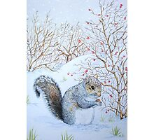 Cute grey squirrel snow scene wildlife art  Photographic Print