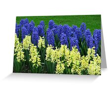 Hyacinths Yellow and Blue - Keukenhof Gardens Greeting Card