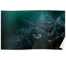 Dandelion seeds and water droplets Poster