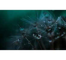 Dandelion seeds and water droplets Photographic Print