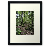 LOTR forest Framed Print