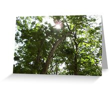 Rays of the Sun Greeting Card