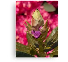 Rhododendron, start of life and in bloom Canvas Print