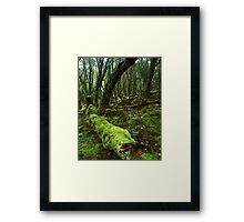 """Enchanted Forest"" ∞ Cradle Mountain, Tasmania - Australia Framed Print"