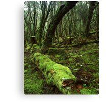 """Enchanted Forest"" ∞ Cradle Mountain, Tasmania - Australia Canvas Print"