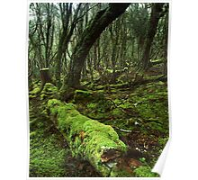 """Enchanted Forest"" ∞ Cradle Mountain, Tasmania - Australia Poster"