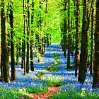 Bluebell Pathway  by CardZone By Ian Jeffrey