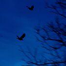 Birds of a Feather by Jaysen Edgin
