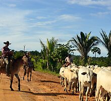 the cattle drive in the Brazilian interior 2 by yesdigiterarte