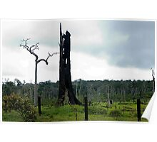 monument to dying Rain Forest 007 Poster