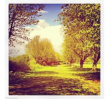 Sunny afternoon in the park Photographic Print