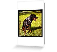 Shy Rottie Greeting Card