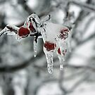 Frozen Ice On Cherry by Tina Hailey