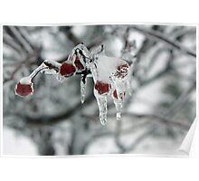 Frozen Ice On Cherry Poster