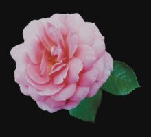 Pink Renaissance Rose by Susan Savad