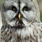 Great Grey Owl or Lapland Owl  by DutchLumix