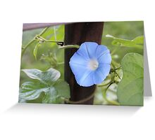 Morning Glory Vine Greeting Card