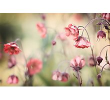 Sweet Geum Photographic Print