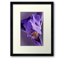 Purple Iris 3 Framed Print