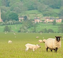 Rural England by Peter Towle