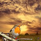 Robin At Sunset  by CardZone By Ian Jeffrey