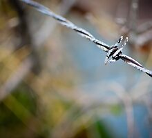 Barbed Wire I by CandiMerritt