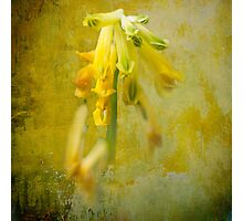 Yellow Crayons Photographic Print