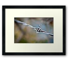 Barbed Wire II Framed Print