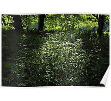Woodland Sunlight 01 Poster