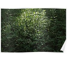 Woodland Sunlight 02 Poster
