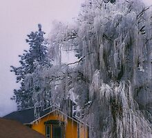 Frozen Willow by va103
