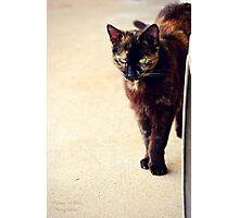 Feline Photographic Print